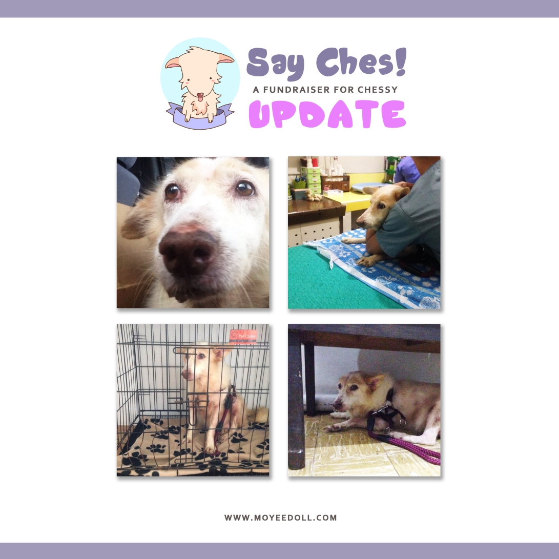 SAY CHES - UPDATE 2.jpg