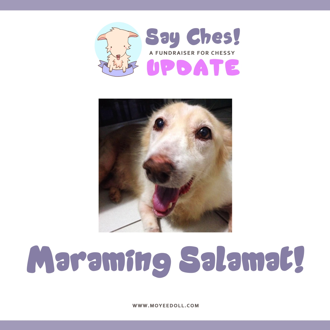 SAY CHES - UPDATE 3